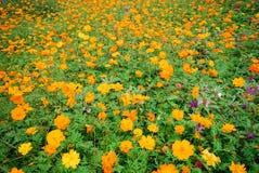 заводы цветков стоковая фотография