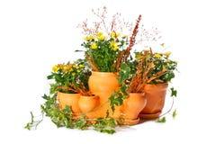 заводы flowerpots крытые установили Стоковое Изображение