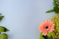 заводы phloxes сада цветков предпосылки Стоковое Изображение RF