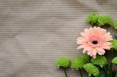 заводы phloxes сада цветков предпосылки Стоковые Изображения