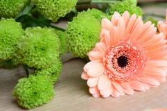 заводы phloxes сада цветков предпосылки Стоковая Фотография RF