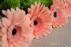 заводы phloxes сада цветков предпосылки Стоковые Изображения RF