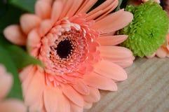 заводы phloxes сада цветков предпосылки Стоковые Фото