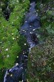 Заводь в лесе среди камней и мха стоковое изображение rf