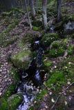 Заводь в лесе среди камней и мха стоковые фотографии rf