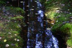 Заводь в лесе среди камней и мха стоковая фотография rf