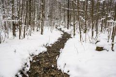 Заводь в пуще зимы Стоковое Фото