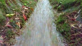 Заводь горы Намочите реку ручейка потока пропуская в зеленом парке в лете текущая вода водопад реки малый Красивая заводь i сток-видео