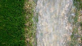 Заводь горы Намочите реку ручейка потока пропуская в зеленом парке в лете текущая вода водопад реки малый Красивая заводь i акции видеоматериалы