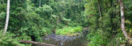 Заводь джунглей Стоковые Изображения