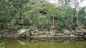 Заводь куколя, национальный парк гоньбы Ku-кольца-Gai, Австралия Стоковое Изображение RF