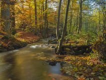 Заводь потока леса долгой выдержки волшебная в осени с камнями mo стоковое фото rf