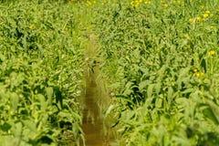 заводь пропускает в зеленой траве Стоковое фото RF