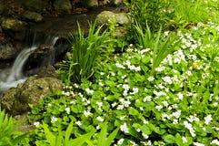 заводь цветет около весны Стоковая Фотография RF