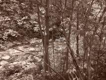 Заводь Chittenango с фильтром sepia стоковая фотография
