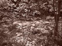 Заводь Chittenango с фильтром sepia стоковое изображение rf