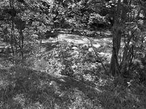 Заводь Chittenango с черно-белым фильтром стоковое фото