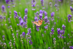 завод бабочки зеленый Стоковое фото RF
