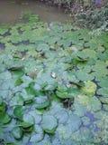 Завод воды тропический стоковые фотографии rf