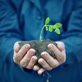 Завод в руках аграрного работника Стоковые Фото