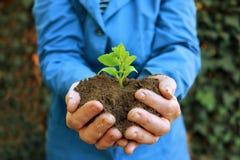 Завод в руках аграрного работника Стоковая Фотография RF