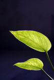 завод дег листьев Стоковые Изображения RF