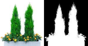 Завод дерева сада с каналом альфы Стоковое Изображение