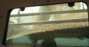 Завод для обработки и хранить зерна, нагружая зерна в тело тележки, конца-вверх Лить зерно мозоли в трактор акции видеоматериалы