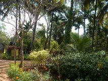 завод и дерево цветка питомника с природой стоковое изображение rf