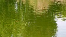 Завод и зеленое озеро сток-видео