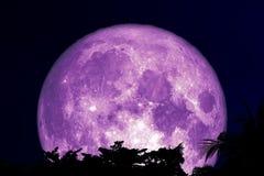 завод и облако дерева силуэта супер пурпурной луны задние на темном ночном небе стоковая фотография rf