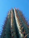 завод кактуса высокорослый Стоковые Фото