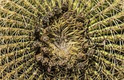 Завод кактуса с много шипов Стоковое Изображение RF