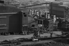 завод лепешки Стоковая Фотография