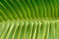 завод листьев тропический Стоковое фото RF