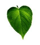 завод листьев Стоковая Фотография