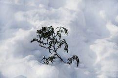 Завод на снеге в зиме стоковая фотография