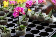 завод орхидеи potted стоковая фотография rf