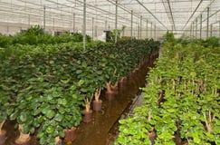 завод питомника houseplants различный Стоковое Фото