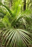 завод предпосылки тропический Стоковое Изображение