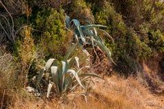Завод пустыни сада кактуса суккулентный в парнике Ландшафт кактуса Поле кактуса Сад цветка древесина песни природы влюбленности g Стоковое Изображение