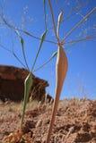 завод пустыни странный стоковое изображение rf
