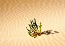 завод пустыни Стоковые Фото