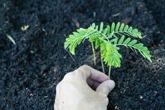 Завод руки дерево Стоковые Изображения