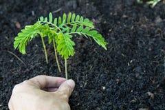 Завод руки дерево Стоковые Фотографии RF