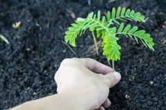 Завод руки дерево стоковое изображение rf