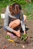 завод сада засаживая женщину томата Стоковые Изображения