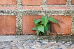 Завод травы растет на земле бетона цемента Стоковая Фотография