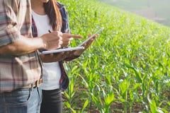Завод Agronomist рассматривая в кукурузном поле, фермере пар и res стоковые фото
