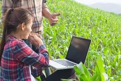 Завод Agronomist рассматривая в кукурузном поле, фермере пар и res стоковая фотография rf